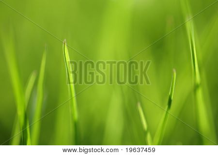 Green grass background. Shallow focus depth on front blades of grass