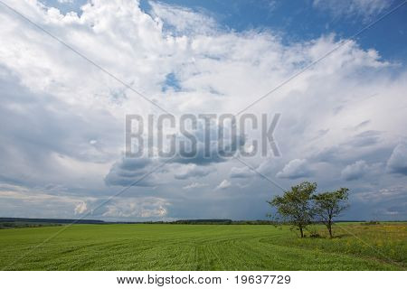 Landscape - green grass field, blue sky, clouds, two trees