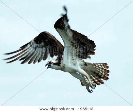 Osprey Flight II