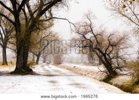 Snowy Walk With Dog