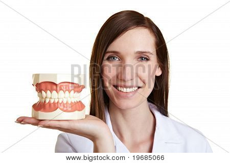 Happy Dentist With Teeth Model