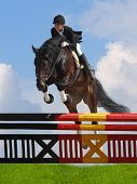 picture of horse riding  - show jumping  - JPG