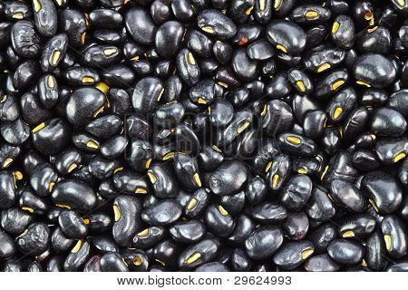 Blackbean