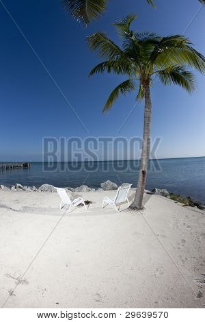 Two chairs and Palm tree