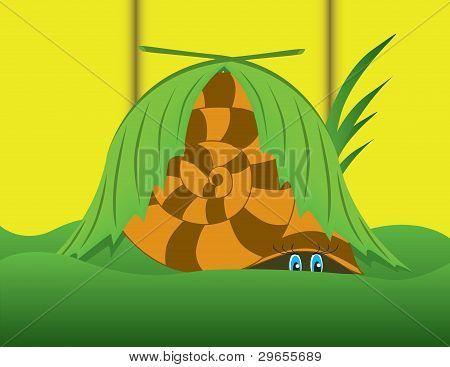 snail  in a grass