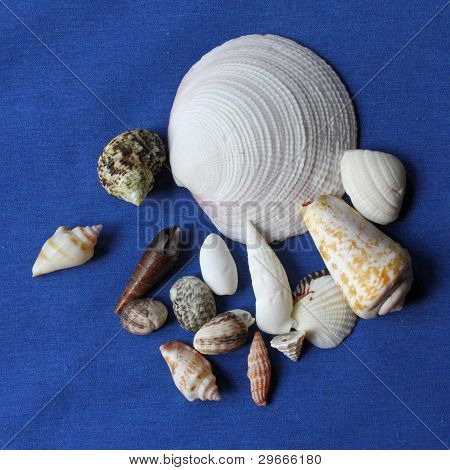 shells on blue background