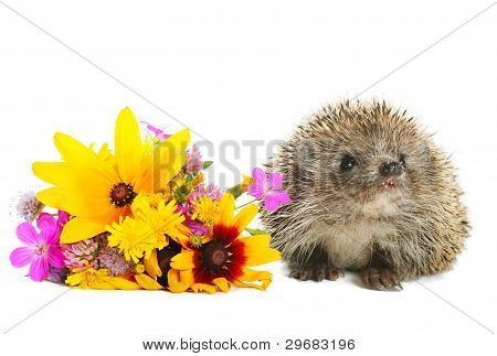 Hedgehog with flowers