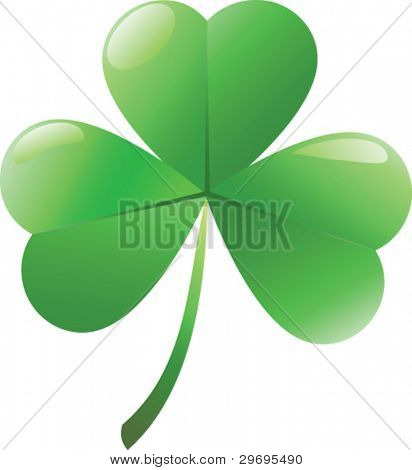 Irish shamrock  isolated over white background