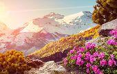 Splendid Mountain Landscape. Wonderful Sunny Day At The Summer Highlands During Sunset. Amazing Beau poster