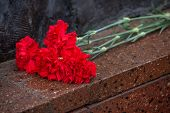 Red Carnation. Background Of Red Flowers. Red Carnations Lie On The Red Granite Surface. Carnations  poster