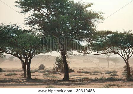 Sandstorm in desert,Sudan