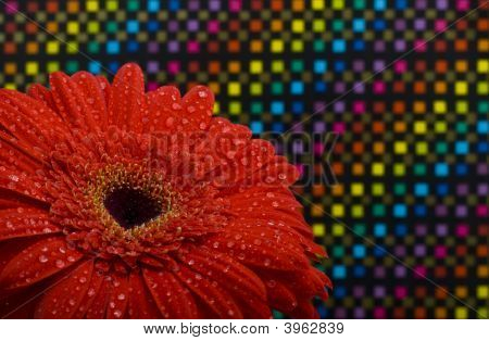 Red Flower Close-Up