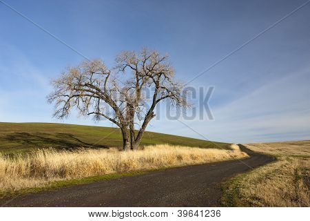 Old Tree On The Palouse.