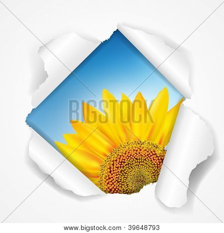 Sky And Sunflower Torn With Gradient Mesh, Vector Illustration