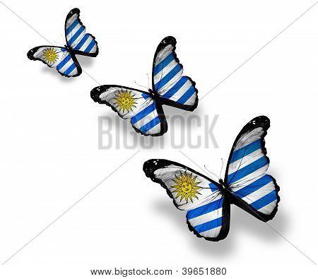 Three Uruguayan Flag Butterflies, Isolated On White