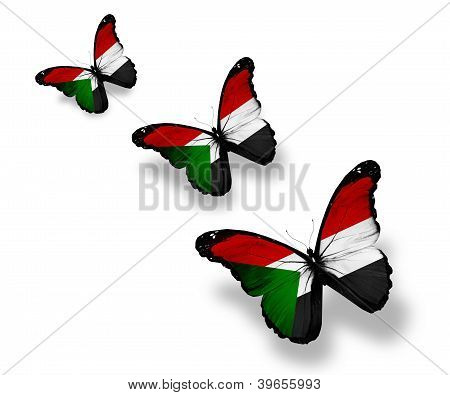 Three Sudanese Flag Butterflies, Isolated On White