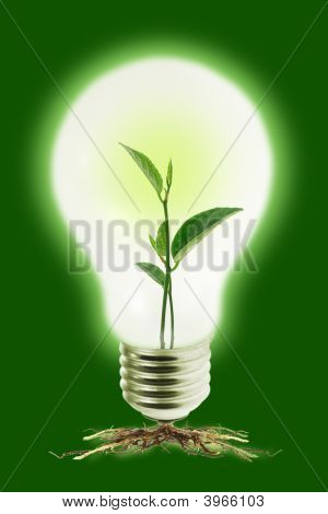 Young Plant In Light Bulb