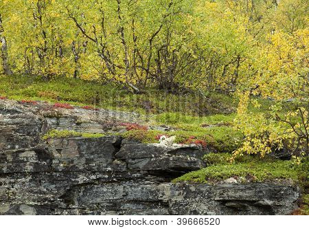 Autumn plants on the edge of a cliff.
