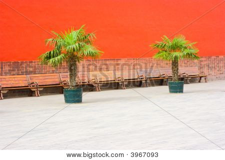 Benches And Palms