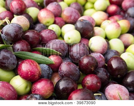 Colorful olives
