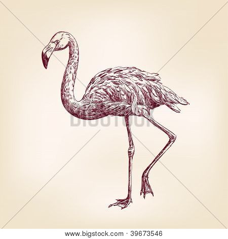 flamingo hand drawn