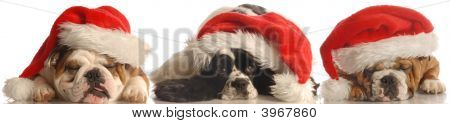 Two Bulldogs And A Spaniel Wearing Santa Hat