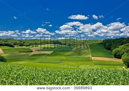 Beautiful Green Agricultural Landscape In Croatia