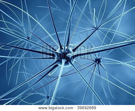 The Brain Neurons And Nervous System