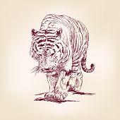 Постер, плакат: Тигр рисованной