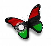Malawi Flag Butterfly, Isolated On White