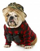 stock photo of redneck  - hunting dog  - JPG