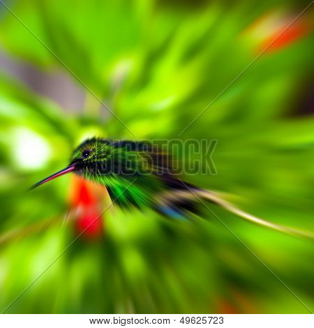 Humming Bird with a Zoom effect ready for action