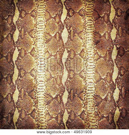 old grunge snake background