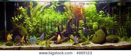 Planted Tropical Aquarium And Fish