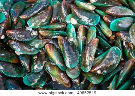 Fresh green mussels at seafood market