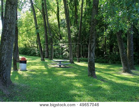 Picnic tables in quiet copse of trees