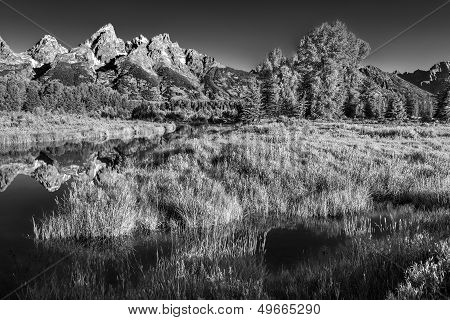Summer Morning At Schwabacher Landing