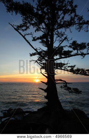 Oregon Coast Portraits