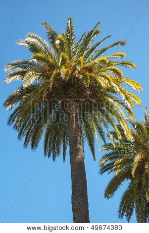 Palmtree On Sun