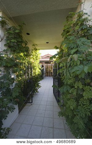 Plants along narrow walkway at entrance to home
