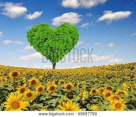 sunflower field with tree from the shape heart