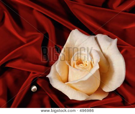 Rose On Velvet