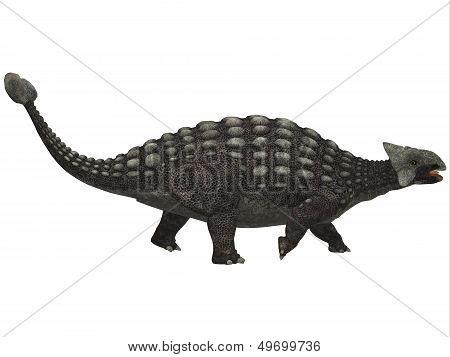 Ankylosaurus On White