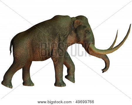 Columbian Mammoth On White