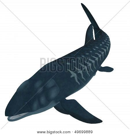 Leedsichthys Fish On White