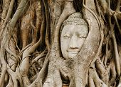 pic of buddha  - Old tree with buddha head in Ayutthaya - JPG