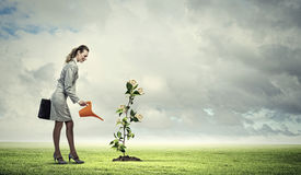 stock photo of water-saving  - Image of business woman watering money tree - JPG
