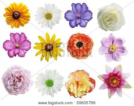 Flowers Collection Isolated On White Background