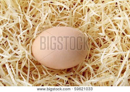One chicken eggs on a bed of straw