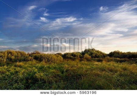 Autumn landscape in the swamp